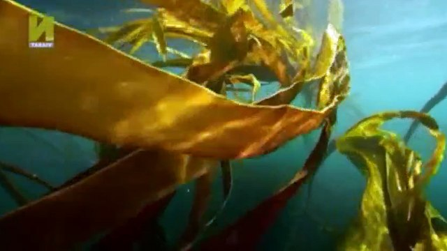 Nature  039 s Microworlds S01  E04 Monterey Bay