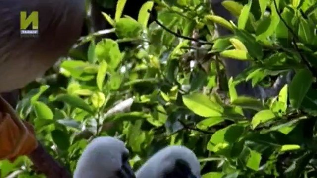 Nature  039 s Microworlds S01  E05 Okavango