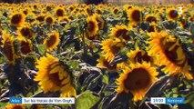 Arles : sur les traces de Vincent Van Gogh