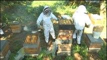 Aide de 3 millions d'euros : les apiculteurs « très dubitatifs » - 03/08/2018