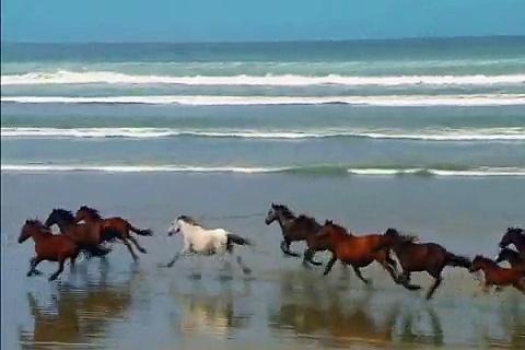 Relaxing Horses!