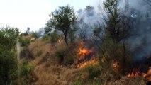 Hizan'da Çıkan Orman Yangınında 3 Bin Dönüm Orman Kül Oldu