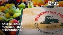 Le sac en toile est-il vraiment écologique ?