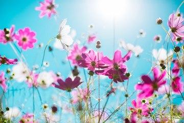 3 astuces pour prendre soin de ses plantes pendant les vacances