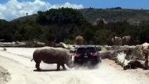 Quand un énorme rhinocéros s'en prend à une voiture de touristes