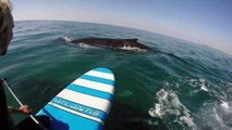 Il fait tranquillement du paddle et rencontre des baleines