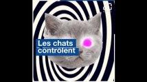 Qui pour détrôner les chats et lolcats, champions d'Internet ?