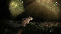 Royaumes secrets. Forêts tropicales et tempérées. Tamia et Scandentien