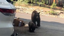 Mama bear with cubs charges cabin with frightened family inside