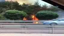 Mudanya'da ormanlık alanda yangın