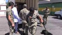 Sınırda görevli mayın arama köpeklerine bakım - MALATYA