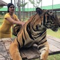 Girl is playing with Tiger (part-1)