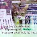 Une librairie à Hong Kong est devenu un refuge pour chats, l'association parfaite entre lecture et ronrons :