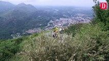 Hautes-Pyrénées : Les buis sont envahis par les chenilles Pyrales