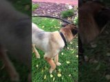 Dog Cries With Joy After Reuniting With Owner's Boyfriend