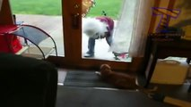 Funny cats scared of random things - Funny cats compilation ,  Top Funny Cat Fails Compilation - Funny Cats ,  Funny cats videos - funny cats vine compilation