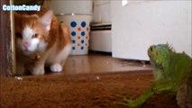 Top Funny Cat Fails Compilation - Funny Cats | Funny cats videos - funny cats vine compilation