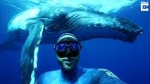 Ce plongeur prend le selfie de sa vie devant une baleine énorme