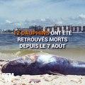 En Floride, une marée rouge décime la faune marine