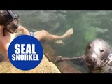 Snorkeler is joined at a harbourside - by a SEAL