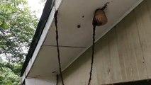 Köprü yaparak arı kovanına saldıran karıncalar görenleri hayrete düşürdü