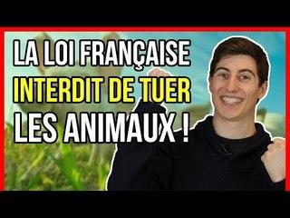 LA LOI FRANÇAISE INTERDIT DE TUER LES ANIMAUX !