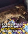 When this tiny donkey was born he was the size of a small cat, rejected and almost killed by his mother – then an angel gave him a chance at a new life...Feel