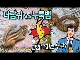 [현장] 다람쥐 이겨라! 누룩뱀 이겨라!  불꽃 튀는 한판 승부 / 연합뉴스 (Yonhapnews)
