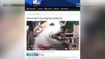 Bagaimana mengenal gejala flu anjing - TomoNews