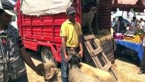 Fas'ta Kurban Bayramı hazırlıkları - RABAT