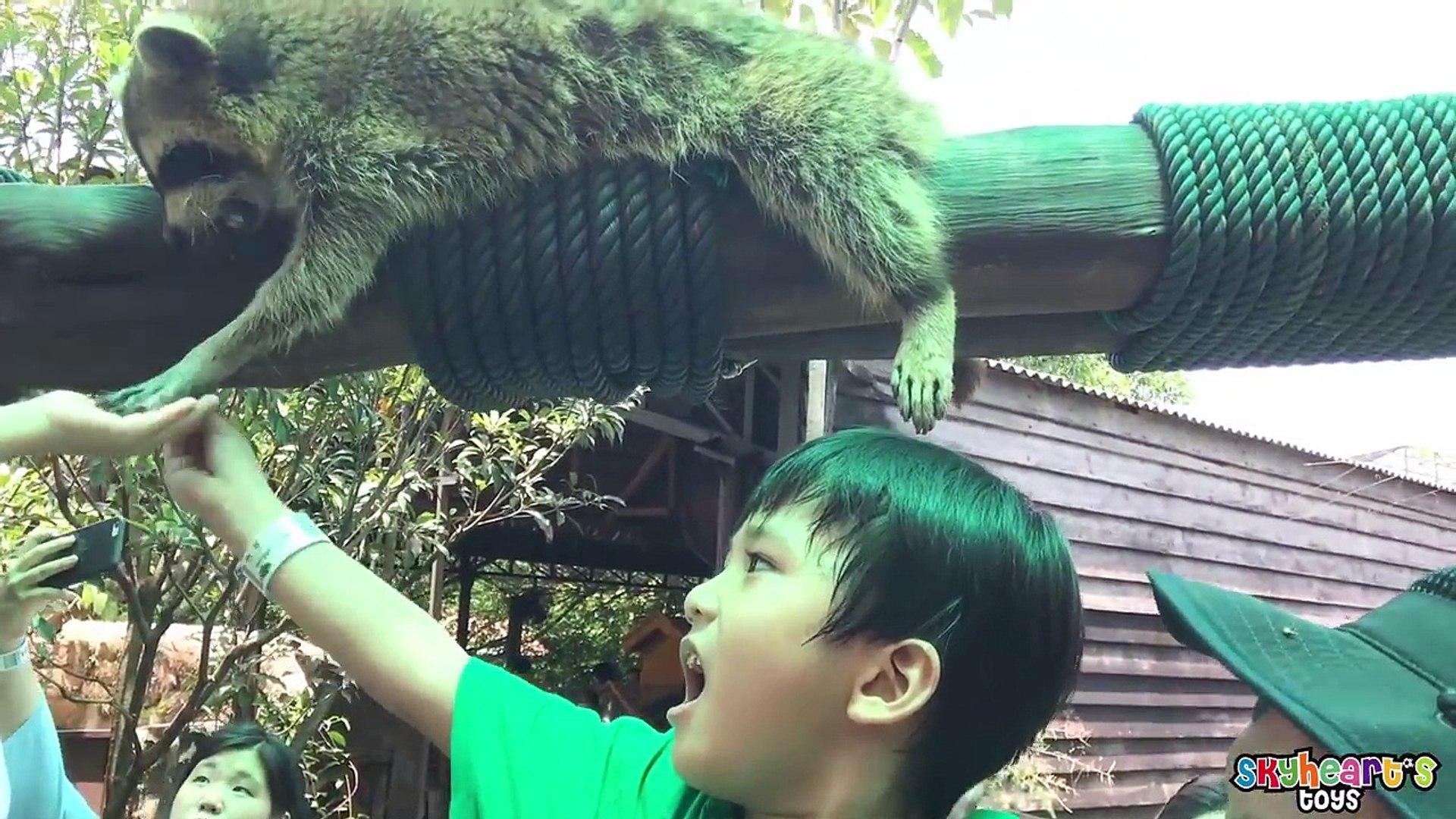 FEEDING ANIMALS IN FARM in the City Malaysia   Zoo Safari petting animals for kids