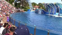 All About Dolphins - Dolphin Days (Full Show) at SeaWorld San Diego