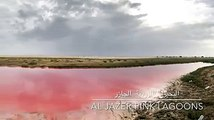 The pink lagoons in Oman have been attracting nature lovers from all around, to spot pink flamingos, these lagoons are a resting place for many migratory birds.