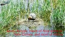 Bird feeding babies: The life of wild birds in freshwater lakes