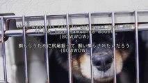 【英語で歌う】 欅坂46 『ガラスを割れ!』 歌詞付き カバー cover  JPOP  KeyakiZaka 46 - Garasu Wo Ware in English