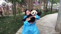 A panda a day, keeps the sorrow away. Nanny Mei is so proud that she has a panda! Yeah, she has every reason to be proud!