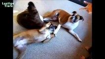 Lustige Haustiere Spielen Tot Nach Finger Shot Lustige Tiere Compilation