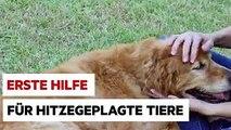 Viele Tiere leiden bei der Hitze. So könnt ihr ihnen helfen.