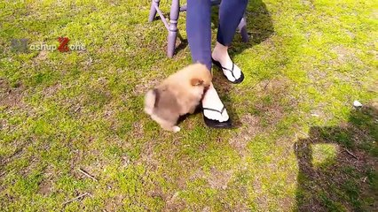 The MOST ADORABLE PUPPIES With Cuteness Overload - Funny And Cute Puppy Videos Compilation