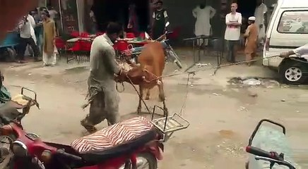 Out of Control Bull RUNS Away After Hitting A Men at FB Area Block 15  Bakra Eid 2018 Special Video