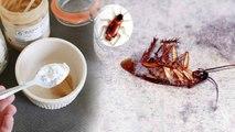 Cockroach: Home Remedies to get rid of Pest | जानें कॉकरोच भगाने के आसान घरेलू टिप्स | Boldsky
