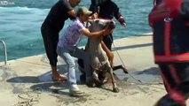 Sauvetage d'un cheval tombé dans l'eau.