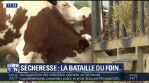 Sécheresse: l'agriculture française en souffrance