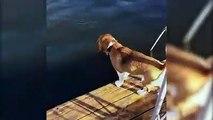 Dieser heldenhafte Hund glaubt ein Mädchen sei am Ertrinken und springt sofort zur Rettung herbei. Bei dem Versuch sie aus dem Wasser zu ziehen, geht er allerdi