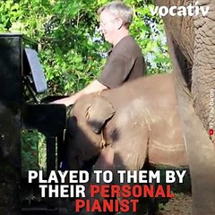 This Pianist Plays Classical Music to Comfort Rescued Elephants In Thailand