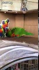 Я думаю, что этот попугай поломался