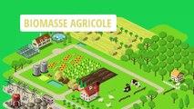 Animation  : La bioéconomie, une approche nouvelle pour des solutions durables