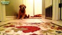 Chiens et chats drôles Scared de pets - Animaux Droles Compilation 2015