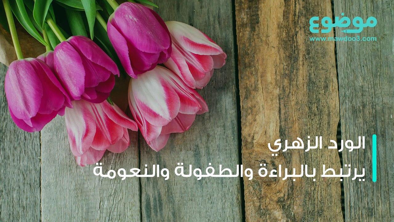 معاني ألوان الورود فيديو Dailymotion