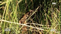 Retour a l'instinct primaire afrique du sud julien et jennifer